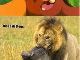 Lion King Birthday Meme Lion King Really King by Daferx Meme Center
