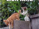 Lion King Birthday Meme Mufasa by Teffler Meme Center