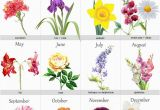 Monthly Birthday Flowers 25 Best Ideas About Birth Flowers On Pinterest Month