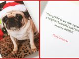 Mooning Duck Birthday Cards Christmas Cards 2014 toughpug Net