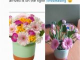 Moonpig Birthday Flowers Mother 39 S Day Disaster as Interflora Flower Service and