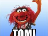 Muppets Happy Birthday Meme Happy Birthday tom Animal the Muppet Meme Generator