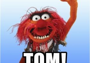 Muppets Happy Birthday Meme Happy Birthday tom Animal the Muppet Meme Generator