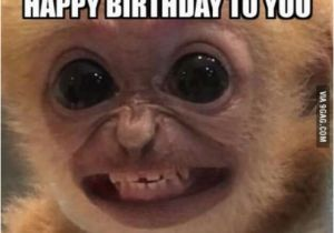 Nasty Happy Birthday Memes Funny Happy Birthday Memes for Guys Kids Sister Husband