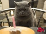 Naughty Happy Birthday Meme Happy Birthday Meme Funny Memes Happy Birthday Meme
