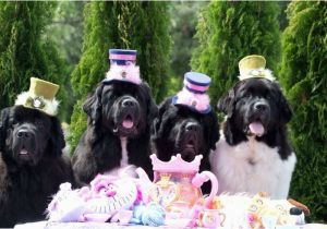 Newfie Birthday Meme 382 Best H B Images On Pinterest Birthdays Birthday
