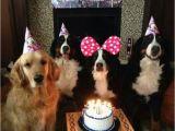 Newfie Birthday Meme Best 25 Happy Birthday Dog Meme Ideas On Pinterest