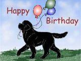 Newfie Birthday Meme Hiep Hiep Hoera Sadi 5 Jaar Hondenforum