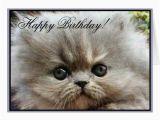 Persian Birthday Cards Happy Birthday Persian Kitten Greeting Card Zazzle Ca