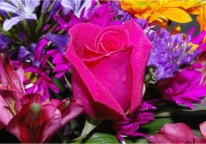 Pic Of Birthday Flowers Birthday Flowers Images and Wallpapers Download