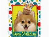 Pomeranian Birthday Card Birthday Cupcake Pomeranian Card Zazzle