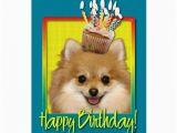 Pomeranian Birthday Card Birthday Cupcake Pomeranian Greeting Card Zazzle