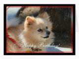 Pomeranian Birthday Card Happy Birthday Pomeranian Greeting Card Zazzle