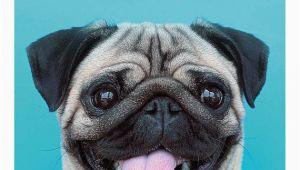 Pug Birthday Memes 25 Best Ideas About Happy Birthday Pug On Pinterest Pug