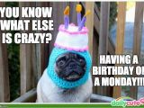 Pug Birthday Memes List Of Synonyms and Antonyms Of the Word Happy Birthday