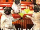Pug Birthday Memes Pin by Fran On Happy Birthday Pinterest Happy Birthday