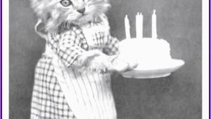 Really Funny Happy Birthday Memes Happy Birthday Memes with Funny Cats Dogs and Cute Animals