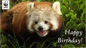 Red Panda Birthday Card Birthday Ecards From Wwf Free Birthday Ecards World