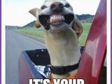 Ridiculous Birthday Memes Happy Birthday Memes with Funny Cats Dogs and Cute Animals
