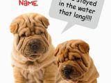 Shar Pei Birthday Card Funny Shar Pei Wrinkly Dog Birthday Card