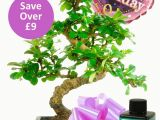 Simple Birthday Gifts for Her Flowering Bonsai Birthday Kit for Her with Free Delivery