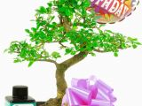 Simple Birthday Gifts for Her Happy Birthday Daisy Balloon Bonsai Gift for Her