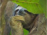 Sloth Happy Birthday Meme Happy Birthday Claudia Said Scheming Sloth Philososloth