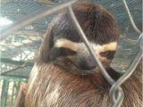 Sloth Happy Birthday Meme Happy Birthday Creepy Sloth Quickmeme 4 Birthdays