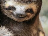 Sloth Happy Birthday Meme Sloth Meme Do You Like Dragons