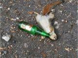 Squirrel Happy Birthday Meme Happy Birthday Go Hard Birthday Wishes Holiday