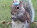 Squirrel Happy Birthday Meme Happy Birthday Lisa Super Birthday Squirrel Meme On Memegen
