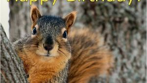 Squirrel Happy Birthday Meme Happy Birthday Squirrel Wishes Animals Pinterest