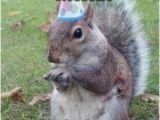 Squirrel Happy Birthday Meme Mike Meme Kappit