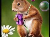 Squirrel Happy Birthday Meme Pin by Mary Lanham On Birthday Wishes Cute Birthday