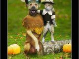 Thanksgiving Birthday Meme Best 20 Thanksgiving Meme Ideas On Pinterest Funny