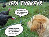 Thanksgiving Birthday Meme Pwb Furrsdai Furries and Feather It 39 Z Thanksgibbin Dai