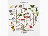 Tree Of Life Birthday Card Tree Of Life Greeting Cards Zazzle