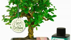 Unusual Birthday Gifts for Her Uk Unusual Birthday Gift for Her Baby Bonsai Gift