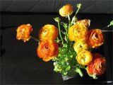 Virtual Birthday Flowers February 2011 Tracey 39 S Truth