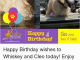 Whiskey Birthday Meme 25 Best Memes About Happy Birthday Wishes Happy