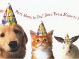 Wildlife Birthday Cards Animal Happy Birthday Pictures
