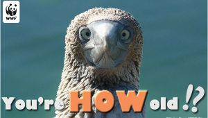 Wildlife Birthday Cards Birthday Ecards From Wwf Free Birthday Ecards World